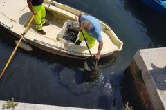 Ripuliscono il molo a bordo di un gozzo