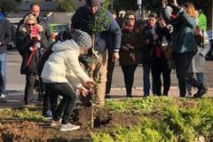 A Carbonara i bambini ripiantano l'albero già rubato due volte