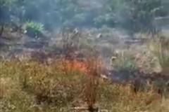 Ancora roghi nelle campagne del IV Municipio di Bari, brucia strada Madonna delle Grazie