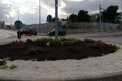 Carbonara, rubato per la terza volta l'albero in via Vaccarella