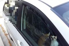 Abbandona sei cani e un pappagallo in auto, denunciata una 38enne a Bari