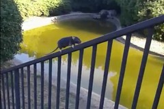 Topi a passeggio per il parco 2 Giugno. La segnalazione dei cittadini