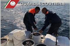 """In macchina con 300 chili di """"cetrioli di mare"""" illegali, scatta il maxi sequestro"""