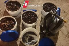 Sub pesca a San Giorgio 60 chili di cetrioli di mare, denunciato