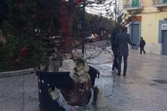 Gravina, distrutto da una bomba l'albero di Natale in piazza