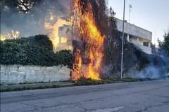 Bari, in fiamme un albero in via Torrebella