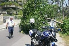 Bari, un albero cade sulla strada in via Marzano