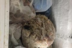 Pesce e carne mal conservati in un ristorante di via Quintino Sella, scatta il sequestro