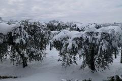 Vento a Bari e neve a nord della Puglia, per 36 ore torna l'inverno