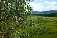 Xylella, sindaci e Coldiretti Puglia uniti per il #BUONEPRATICHEDAY
