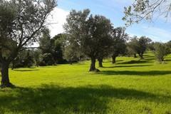 Xylella, probabile moratoria sui mutui degli olivicoltori