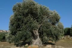 Agromafie, Puglia al terzo posto in Italia