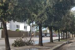 Maltempo in Puglia, un morto ad Altamura
