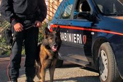 Controllo del territorio dei carabinieri, in provincia di Bari denunciati due 27enni