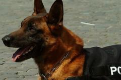 Scoperti con la droga dai cani poliziotto alla stazione di Bari, scatta il sequestro
