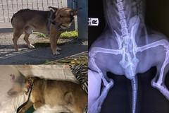 Cornavirus a Bari, la paura del contagio ennesima scusa per abbandonare i cani