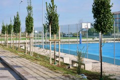Arriva il verde intorno ai playground sportivi di Bari, Petruzzelli: «Piantati 60 alberi»