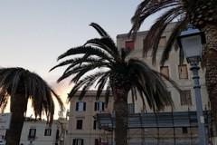 Bari, Carrieri: «Che succede alle palme della muraglia?»