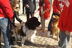 La Polizia Locale premia la Scuola Cani Salvataggio Nautico