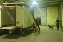 Con oltre 5 chili di cocaina e 50 di marjuana nel camion frigo, dalla Calabria al porto di Bari