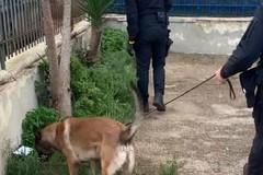 Lotta alla droga a Bari in pochi giorni tre arresti a Japigia e San Paolo