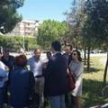 Bari, pronti 115 nuovi alberi per sostituire i 35 pini espiantati in via Caldarola