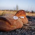 Provincia di Bari, il pane di Altamura patrimonio culturale immateriale dell'Unesco