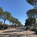 Oltre 3mila potature in strade, parchi e giardini di Bari negli ultimi 4 mesi