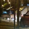 Cinghiali al San Paolo, continuano gli avvistamenti