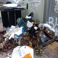 Bari, rifiuti di ogni tipo in via Giulio Petroni