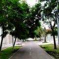 Quartiere San Paolo, le chiome degli alberi crescono sulla pista ciclabile
