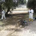 Bari, via le erbacce dalle strade. Interventi a Carrassi e San Paolo