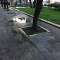 """Gli impianti d'irrigazione in corso Cavour  """"fanno acqua """". La segnalazione: «Quanti sprechi»"""