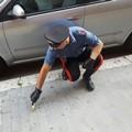 Omicidio Terni, albanese dichiara di essere innocente