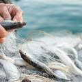 Fermo pesca obbligatorio esteso fino a domenica 8 settembre da Bari a Manfredonia