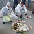 Raccolta differenziata, a Bari peggiora dell'8 percento la qualità dell'organico conferito