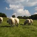 Coldiretti Puglia, stop agli agnelli abusivi per Pasqua