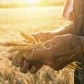 Agricoltura per il Sud, 100 proposte per l'innovazione