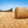 Piano di sviluppo rurale, il Tar Puglia accoglie ricorso delle aziende agricole