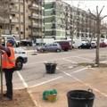 Japigia, partita la piantumazione di 33 alberi in via Caldarola