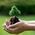 Bari, un albero per ogni vittima del Covid
