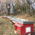 Miele di Puglia, crescita continua: export in tutto il mondo