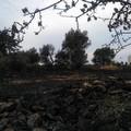 Lama Balice, il giorno dopo l'incendio l'area naturale è una desolazione