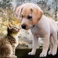 Covid, gli animali domestici si infettano ma non contagiano. La ricerca dell'Università di Bari
