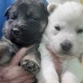 Due cuccioli di cane abbandonati in un cartone, ora cercano casa