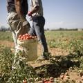Reclutavano braccianti in provincia di Bari per sfruttarli nei campi. Otto patteggiamenti