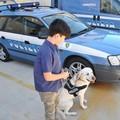 Donna scomparsa a Bari da una settimana ritrovata grazie al fiuto dei cani