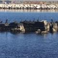 Cambiamenti climatici, in Puglia è invasione di cormorani