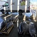 Sbarca a Bari con tonno pescato illegalmente. Il prodotto viene donato a InConTra