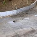 Escrementi e rifiuti nel cimitero di Bari, Sos città: «Situazione indecorosa»